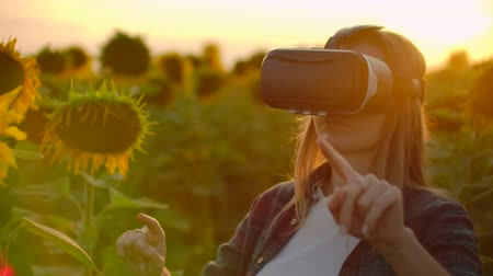 artificial flower : The woman is working in VR glasses at sunset between big sunflowers