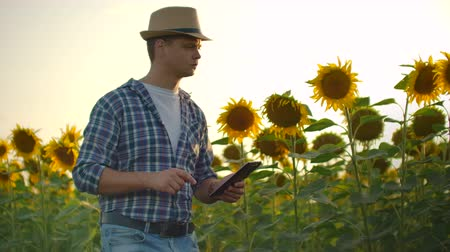 tab : Young farmer with a tablet on a sunflower field in sunny evening