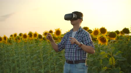 подсолнухи : Modern technologies on the sunflowers field in nature Стоковые видеозаписи