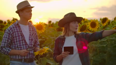 agrarian : Two botanists on the sunflowers field Stock Footage
