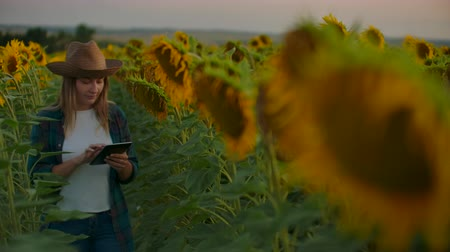 botanikus : The girl between high sunflowers Stock mozgókép
