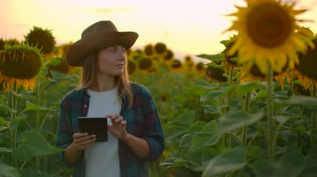 botanikus : Female student on the field with yellow sunflowers Stock mozgókép
