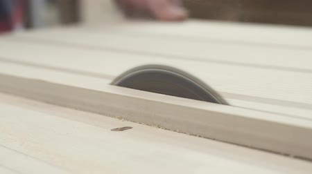 which : Circular table saw cutting wood in carpenter workshop close up