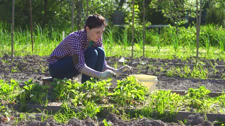 ferahlatıcı : cute girl in shirt working with plants in the garden