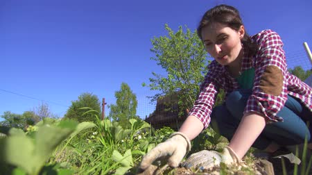 weeding : girl farmer in plaid shirt working with plants on a Sunny day