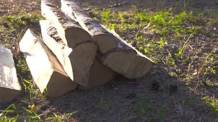 separado : chipped birch logs in the forest at sunset Stock Footage