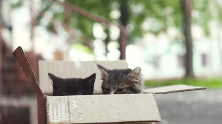 animal adoption : unhappy kittens in a box outside in the rain