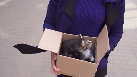 animal adoption : girl carries a box of abandoned kittens to an animal shelter Stock Footage
