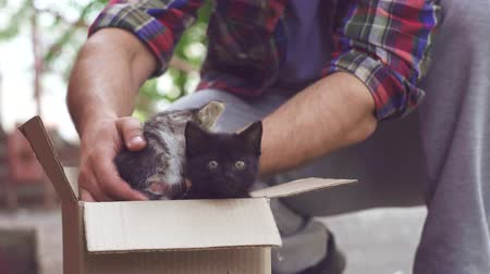 bondade : a man picks up kittens on the street and carries them to an animal shelter Stock Footage