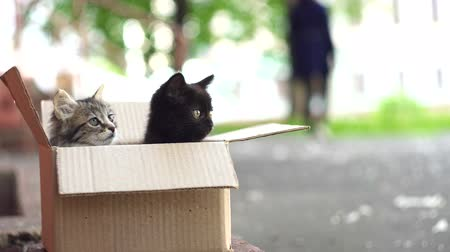 zbloudilý : two scared tossed kittens in a box on the street Dostupné videozáznamy