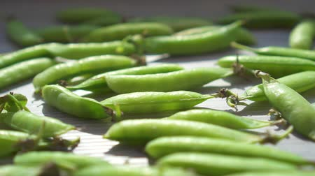 pea pods : Pods of fresh green peas on the table