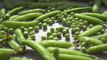 стручок : Fresh green peas and pods in close-up on the table lit by the sun