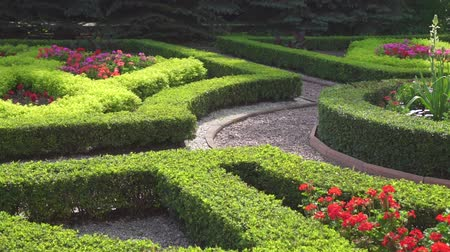 boxwood : view of beautiful garden in English style detail