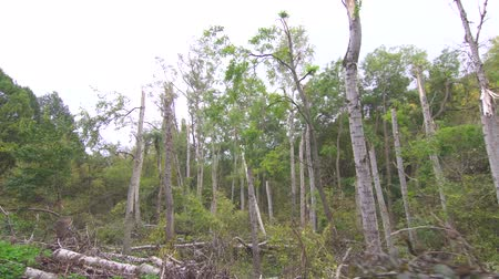 devastated : Hurricane effects in the forest Stock Footage