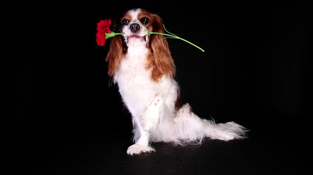 gün : Valentines spring love mothers womens day flower dog