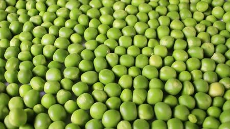 Green peas. Pea grains rotating pattern macro texture background backdrop footage video. Стоковые видеозаписи