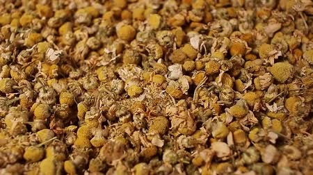 Chamomile,camomile dried flower leaves tea rotating pattern macro texture background backdrop footage video.