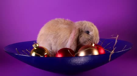 лань : Christmas animal rabbit pet with ornaments.