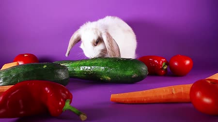 лань : Bunny and vegetables. Rabbit with vegetable. Carrot,cucumber,