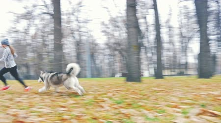 аляскинским : Image of young girl playing with her dog, alaskan malamute