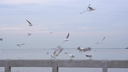 ostražitost : Seagulls perch on bridge rail in the evening,