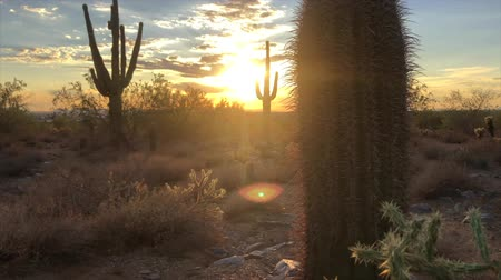 kaktus : Scottsdale Arizona desert sunset
