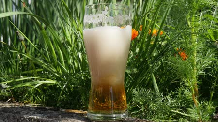 glass of blonde beer in nature Stok Video