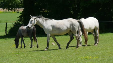 group people : white horse in the meadow