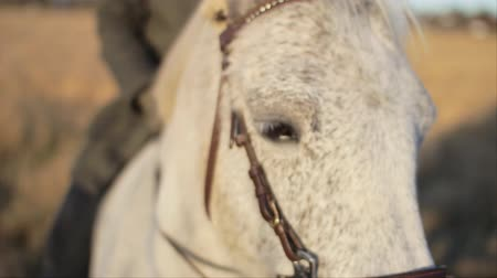 midilli : A close-up macro shot of the face and head of a white horse being ridden by its owner.