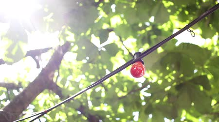 hippi : A decorative red light bulb hanging in a lush tree with sun rays shining through it in the summer. Stock mozgókép