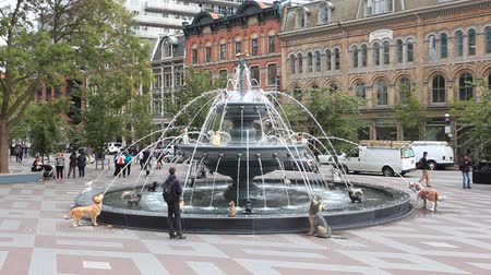 Toronto, Canada - Oct 13, 2017: Dog fountain at the Berczy Park in the city of Toronto. The fountain was designed by the architect Claude Cormier. Province of Ontario, Canada Стоковые видеозаписи