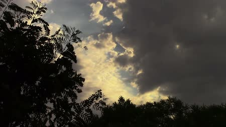 Zoom in of back lit  clouds and leaves blowing in the wind. Dostupné videozáznamy