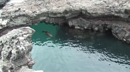 lave : Sealions coming through cave the small one jumps on other.