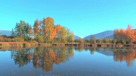upadek : Autumn colors reflecting on a quiet lake Wideo
