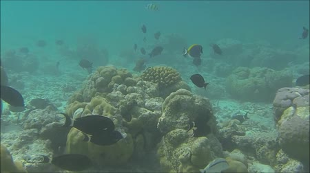 balık : Tropical Fish and Coral Stok Video