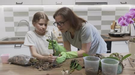 горшках : Mother with daughter child planting orchid flowers in pots, background at home kitchen