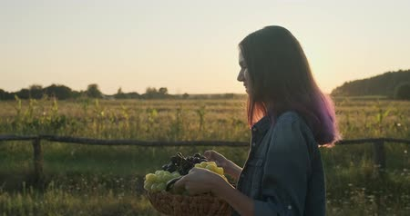Young beautiful girl walking with a basket of grapes, rural landscape background, nature golden hour, autumn harvest