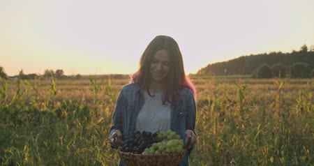 Basket with harvest of blue and green grapes in hands of young girl, rustic style, natural landscape golden hour
