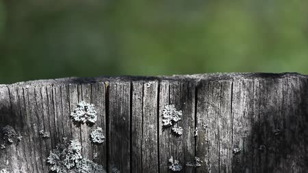 ants : Wood with lichens and ants, shadows from tree branches Stock Footage