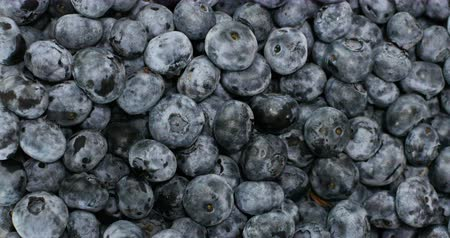 földi szeder : Slow motion of fresh blueberry fruits.