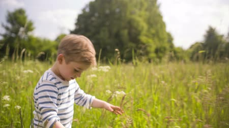 çim : Little boy walking through tall grass Stok Video