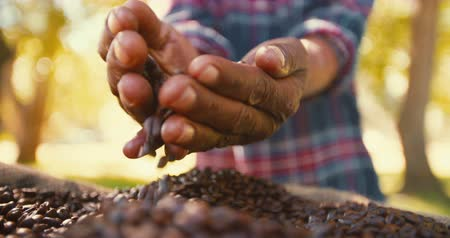 кофе : Coffee bean produce benefits from fair trade farming  slow motion Стоковые видеозаписи