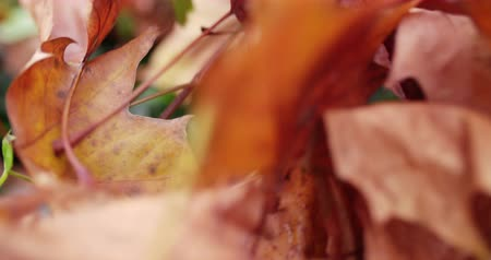 fall through : Wind blowing through autumn leaves on ground Stock Footage