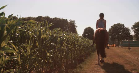 helmets : Rearview of a young girl wearing a helmet riding her horse along a lush green path on a farm in Slow Motion
