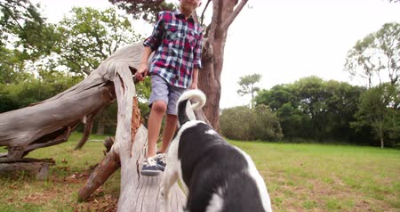 mestiços : Little Boy and his cute puppy dog walking on tree branch in park. The child following his animal friend.