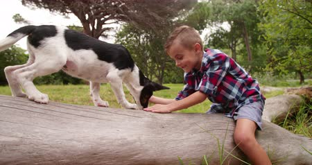 mestiços : Best friends having adventure in park. Little Boy lying on tree log in nature or park face to face with mischievous puppy dog. Vídeos