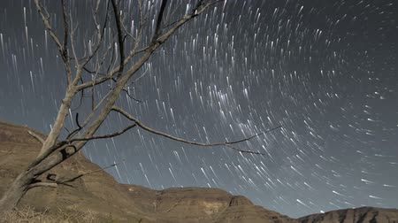 стрельба : Night sky timelapse of stars and milky way with silhouette trees in the foreground