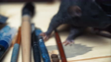 Beautiful lovely small home little pet brown mouse close up. running around the table playing artist