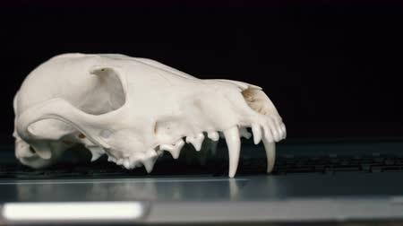маска : Fox skull without the lower jaw on the laptop keyboard. Concept of the dangers of IT Tehology and Artificial Intelligence
