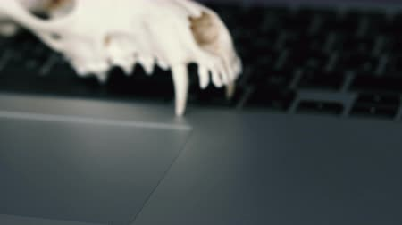 stealth : Fox skull without the lower jaw on the laptop keyboard. Concept of the dangers of IT Tehology and Artificial Intelligence